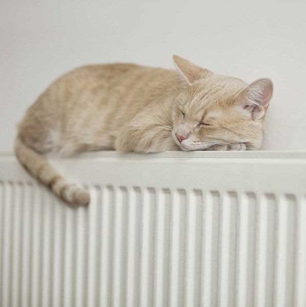 cat sleeping on a radiator
