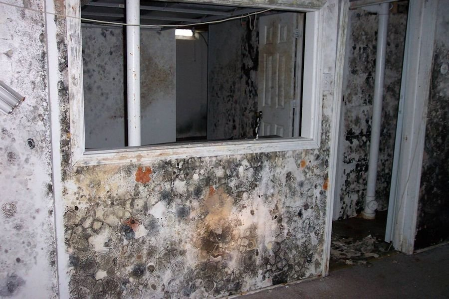 free mold inspections Palm Beach - Port St Lucie - Fort Lauderdale