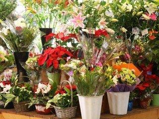 Vendita vasi per fiori