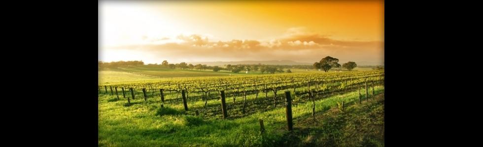 Agriturismo i Crinali