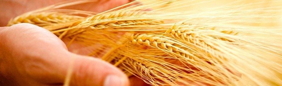 servizi agricoltura
