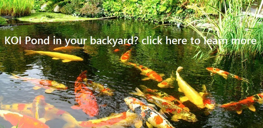 Pet store koi pond rochester nh laconia pet center for Koi pond quezon city