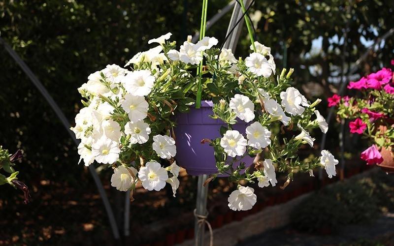 Noleggio fiori per allestimenti
