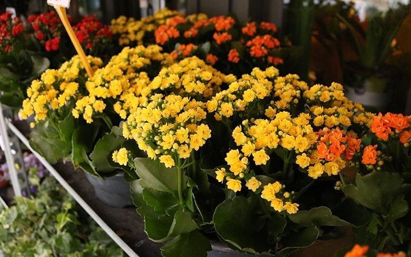 Consegna fiori Palermo