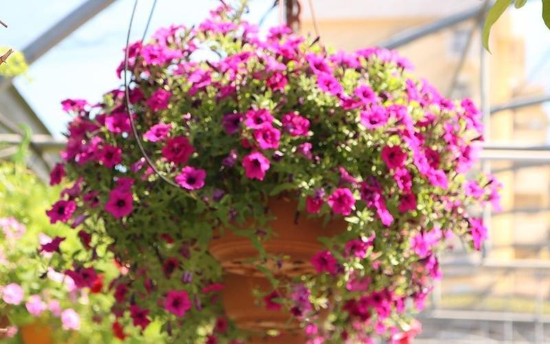 Noleggio allestimenti floreali