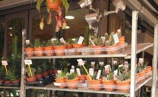 Vasi per piante e fiori Palermo
