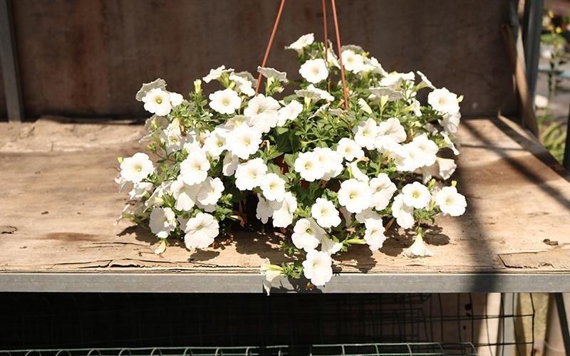 Noleggio composizioni floreali