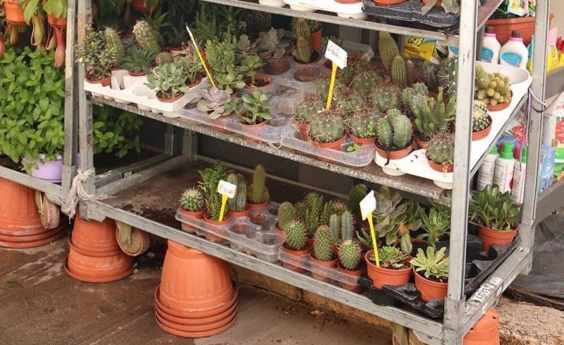 Vasi per fiori e piante Palermo
