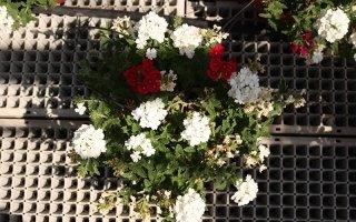 Noleggio fiori e strutture