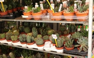 Consegna piante Palermo