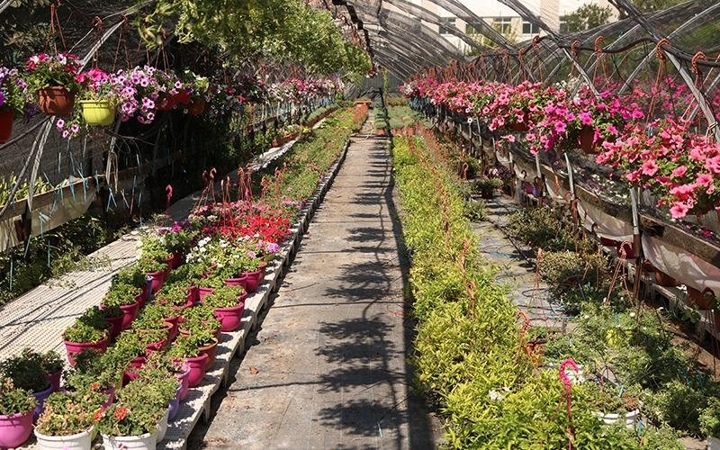 Noleggio piante per allestimenti
