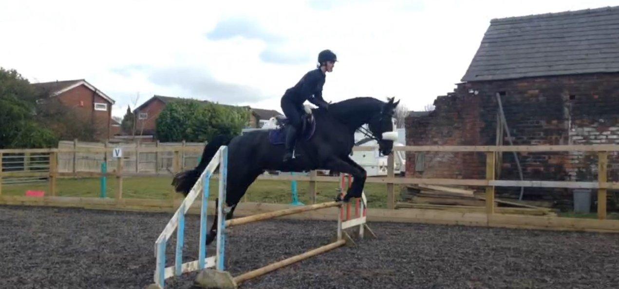 custom made noseband on jumping horse