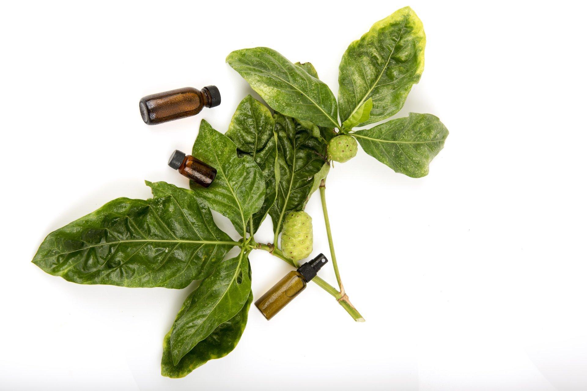 pianta medicinale con boccette di farmaci omeopatici