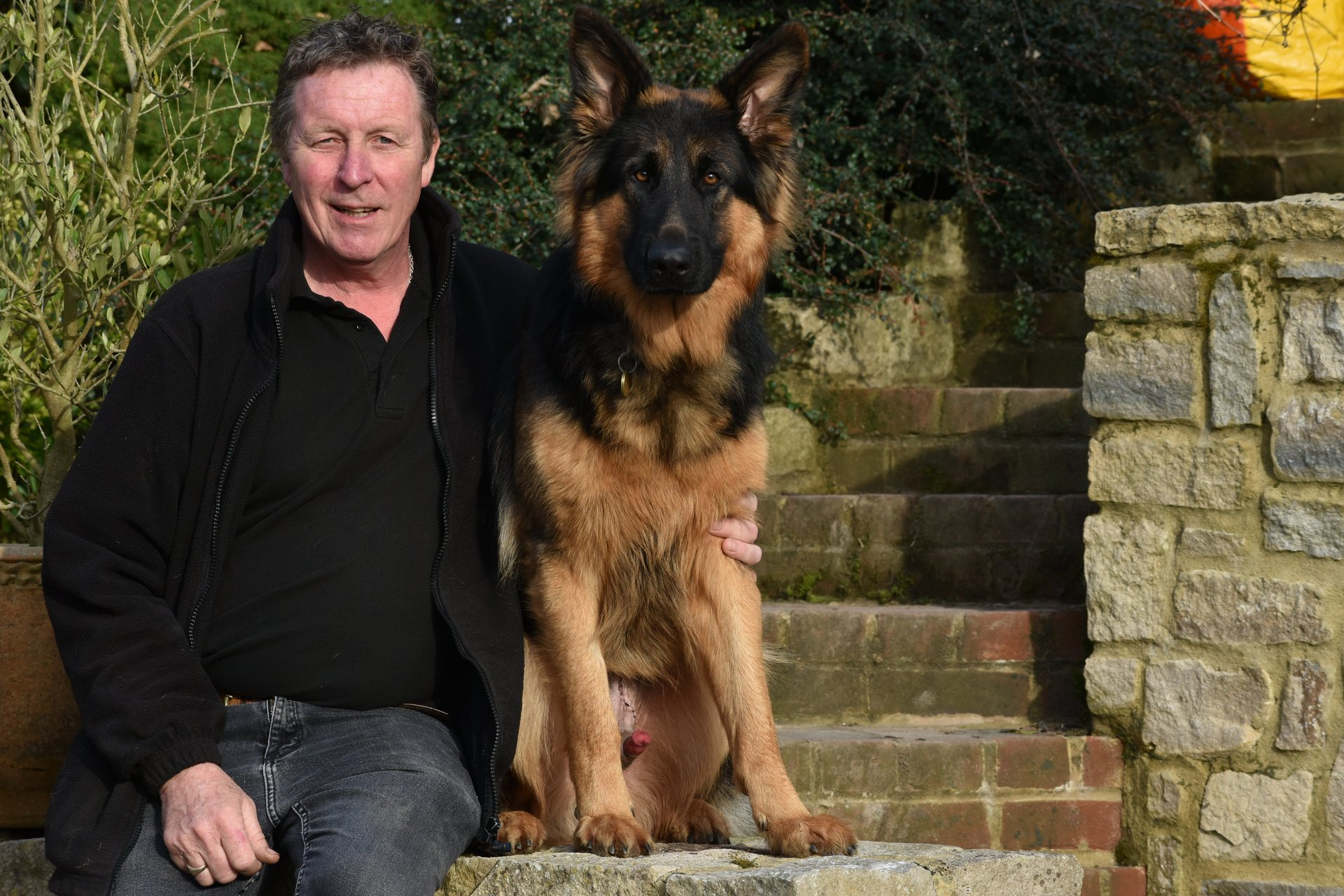 german shepherd with trainer