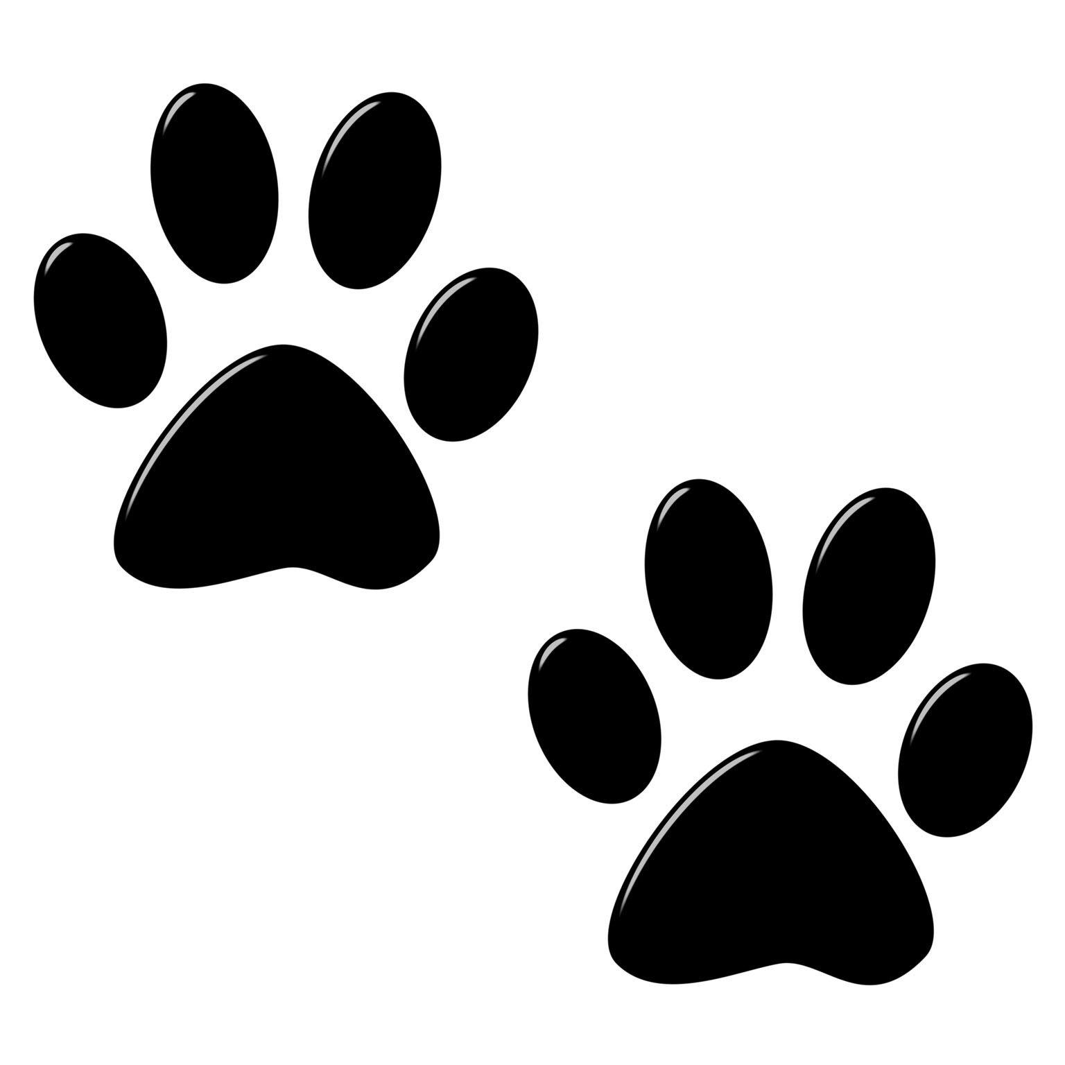 dog foot