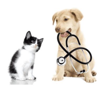 Cura patologie veterinarie