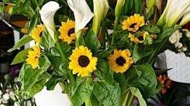 piante primaverili