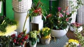 piante da regalo