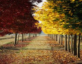 Tree removal services in Cincinnati, OH