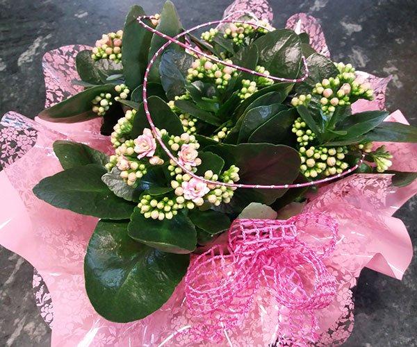 un bouquet di fiorellini rosa e gialli non ancora sbocciati e sotto una carta rosa