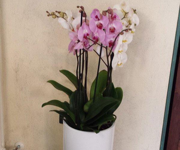 un vaso con dei fiori rosa e bianchi