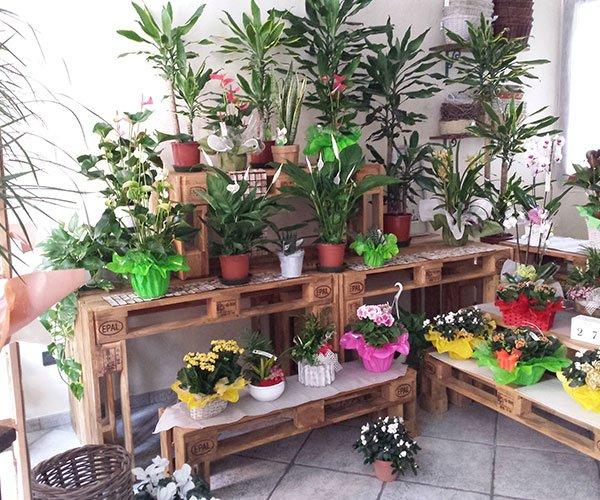 esposizione di piante su panche di legno