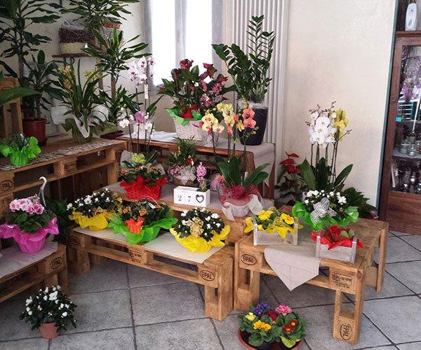 piante e fiori esposti su panche di legno