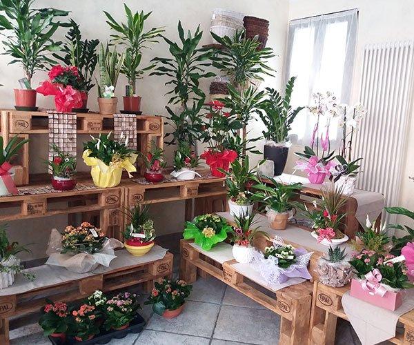 panche di legno con piante e fiori