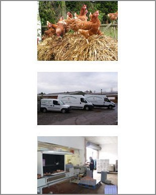 Eggs - Canterbury, Kent - Woodlands Poultry Farm - Egg suppliers