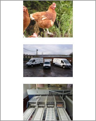 Egg suppliers - Canterbury, Kent - Woodlands Poultry Farm - Poultry Farm