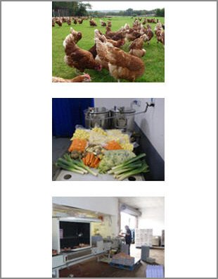Chickens - Canterbury, Kent - Woodlands Poultry Farm - Vegetables