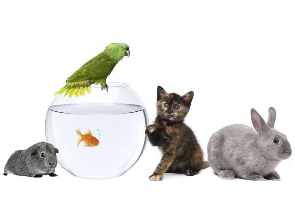 vendita animali piccola taglia calolziocorte