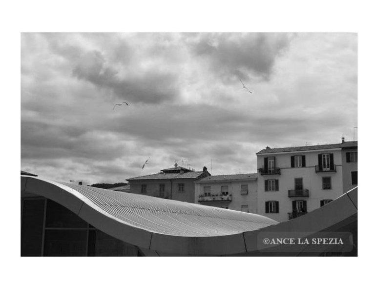foto Bisciotti