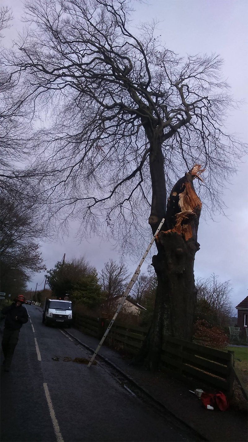 tree specialist at work
