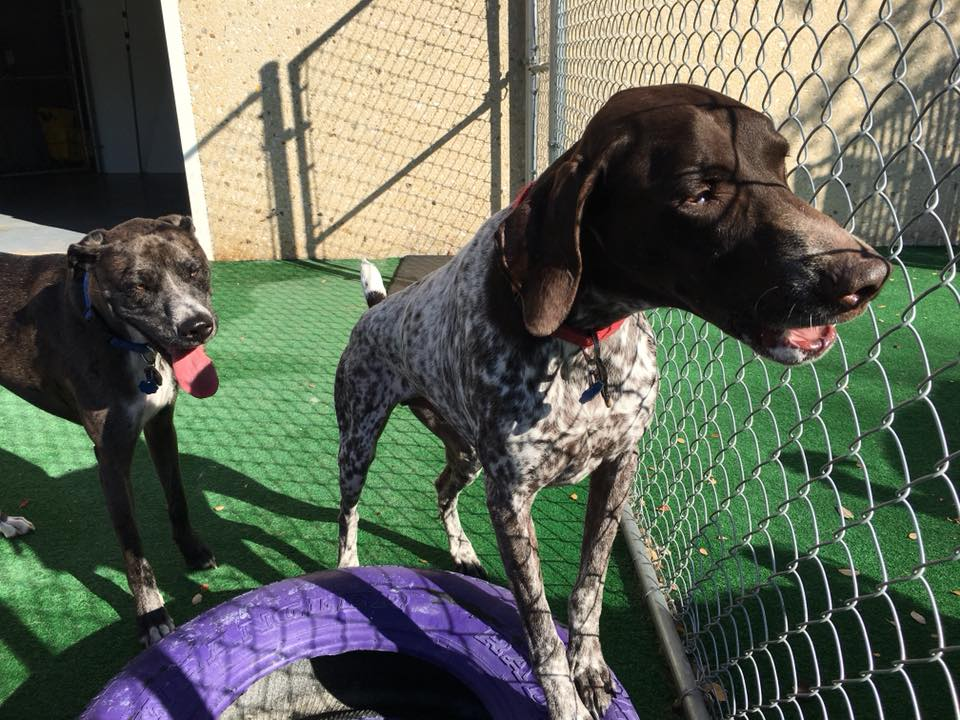 Dog Boarding And Daycare In San Antonio Tx Tail Waggerz