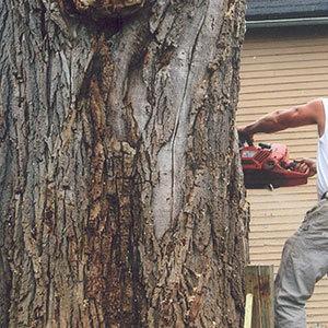 Tree Removal Buffalo, NY