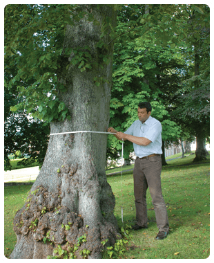 Martin measuring a tree