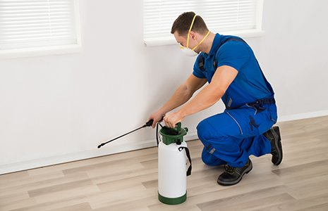 Male worker spraying pesticide on wall at home
