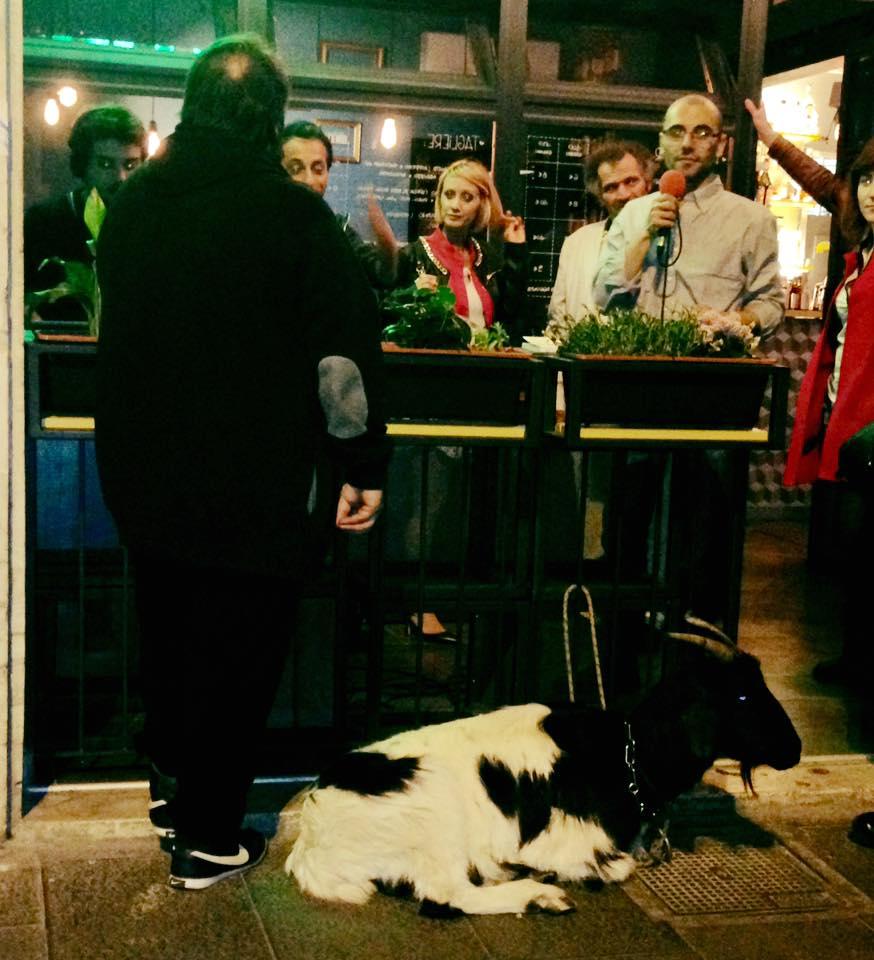 gente durante un festa in un bar con una capra