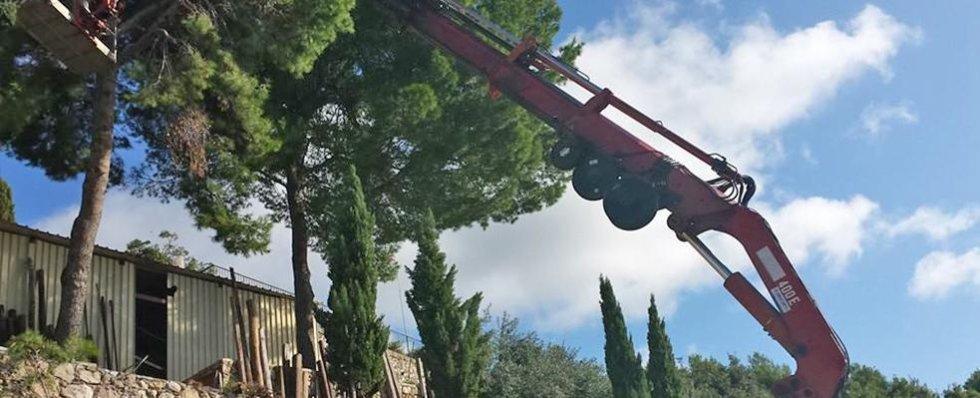 potare alberi
