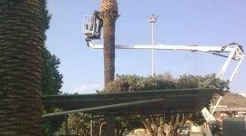 potatura piante alto fusto