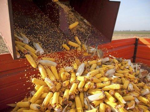 impianti trasporto cereali garlasco