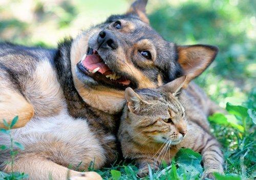 un cane e un gatto