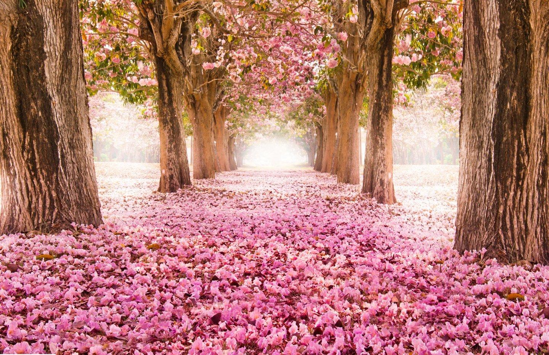 campo con fiori rosa