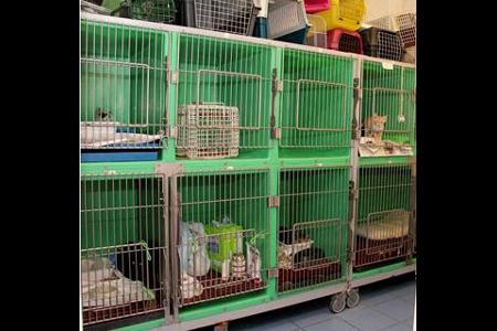 clinica veterinaria tergeste