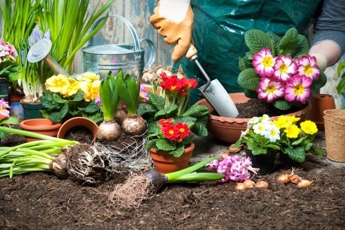 piante di vari tipi