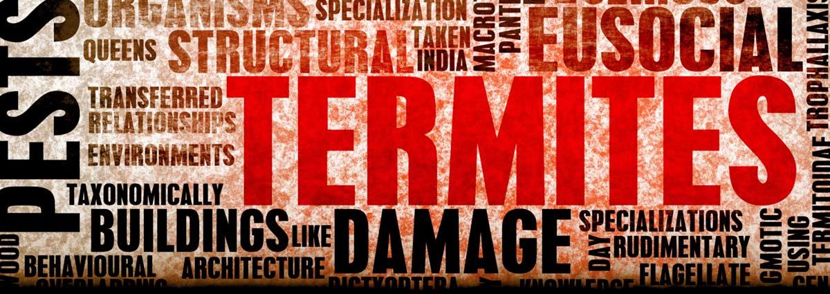 termites-banner