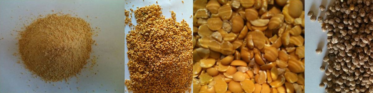 kalgrains multiple cereals