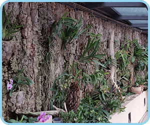 Greenhouses and indoor installations