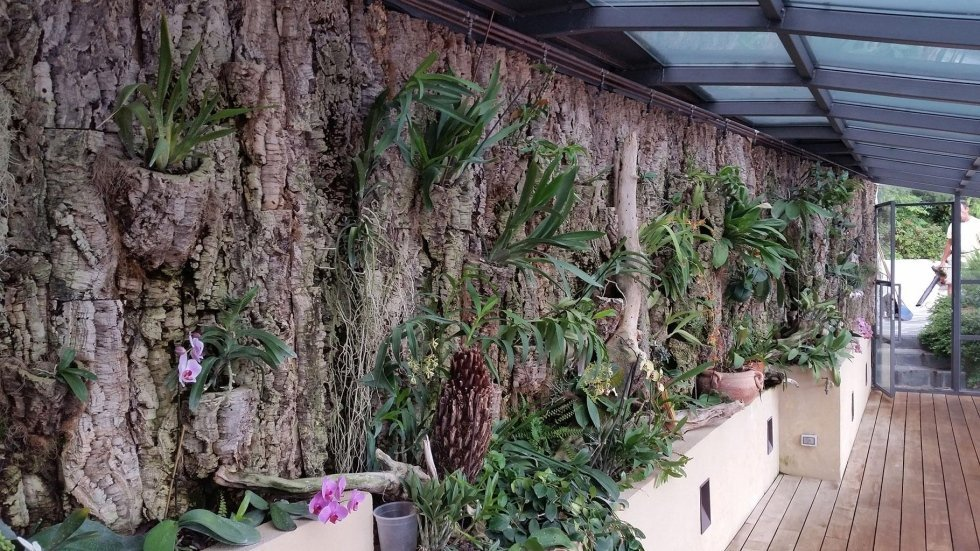 parete tropicale verticale in sughero indoor